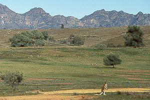 Flinders Ranges 1